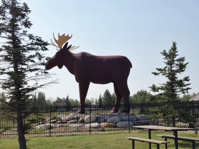 The only moose I saw