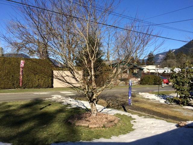The Wintertree ... waiting, waiting, for Spring