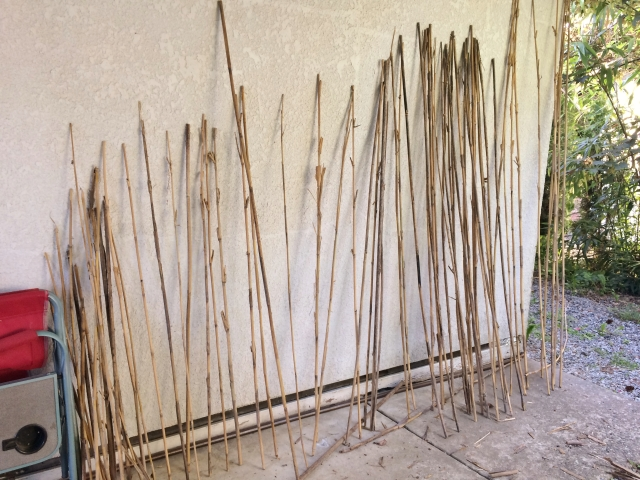 An assortment of dried bamboo sticks ...