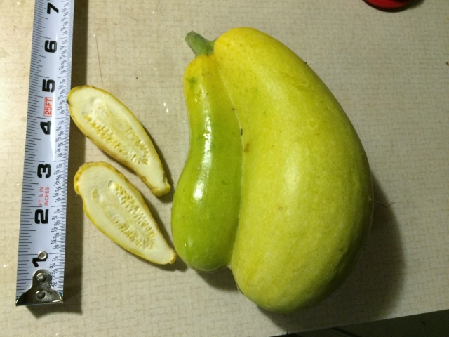 Mysterious unknowable vegetable ... or is it?