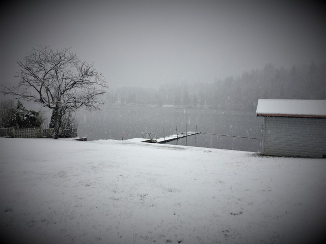 The tree, the shed, and dock all in white … somehow I think the new year just might … be alright